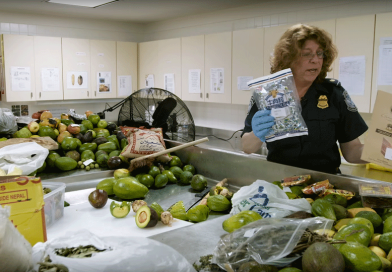 Find Out What Happens to Illegal Food After It's Confiscated